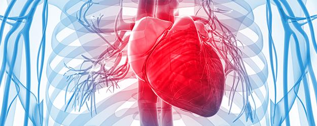 heart failure fellowship